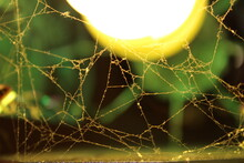 A Web In The Rays Of Light