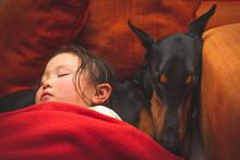 一緒に眠る少女とドーベルマン