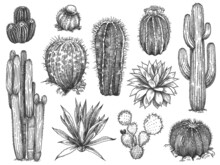 Sketch Cactus. Hand Drawn Succulents, Prickly Desert Plants, Agave, Saguaro And Prickly Pear Blooming Cactuses Engraving Vector Set.