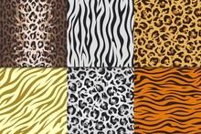 Seamless Animal Prints. Leopard Tiger Zebra Skin Patterns, Texture Stripes Backgrounds. Vector Africa Animals Different Patterns