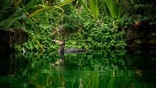 Pond With Cormorant