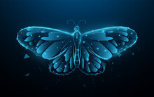 Butterfly. Low Polygon Line, Triangles, And Particle Style Design. Abstract Geometric Wireframe Light Connection Structure. Vector Illustration