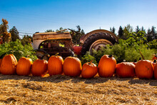 A Weathered Tractor In A Pumpkin Patch