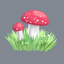 Amanita In The Grass On Gray Background