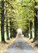 canvas print picture - Herbst Allee