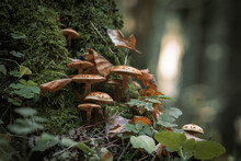 Mushrooms In Autumn Forest Sunlight Green Grass Yellow And Orange Colors