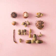 Hazelnut, Acorns And Chestnuts Carefully Arranged.   In A Square On A Pastel Pink Background