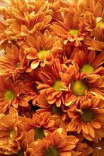 Bouquet Of Orange Chrysanthemums Top View
