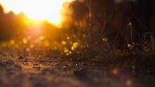 Macro De Cailloux Sur Un Chemin De Terre, Illuminés Par Le Coucher Du Soleil, En Contre-jour
