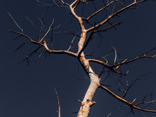 A Withered, White Tree Against A Blue Sky