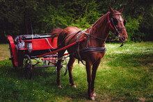 Brown Horse Pulling An Old-fashioned Red Carriage In The Park, A Natural Green Environment.