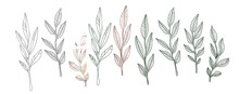A Set Of Painted Plants. The Skeleton Of The Leaves. Vector Illustration.