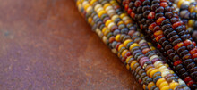 Colourful Fall Corn On Rustic Background Long Horizontal Image