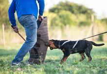 Training Of Puppy Rottweiler