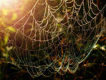 Close-up Of A Spider's Web