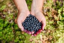 Senior Man Holding Blueberries