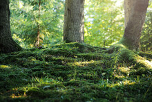 Green Moss Growing Near Trees In Forest