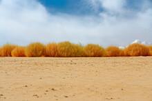 Sand Beach And Saltwort Plants On The Beach, Beautiful Fall Season And  Cloudy Sky Background