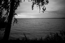 Lonely Birch On Lake Shore, Black And White Monochrome Grayscale, Landscape With Slightly Wavy Water, Clouds In Sky And Horizon Line Far Away, Branches Are Framing Picture