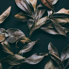 Plant Herbarium