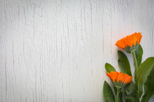 Small Bunch Of Vibrant Orange Marigold Flowers On White Wood Grain Background