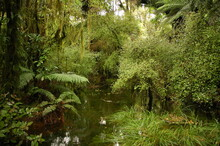 A Pond In The New Zealand Wetlands