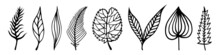 Leaves Of Trees Vector Set. Hand-drawn Doodles Isolated On White Background. Black Silhouettes Of Veined Leaves. Foliage With Petioles. Collection Of Botanical Sketches. Plant Outlining. Monochrome.