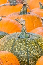 Green And Yellow Speckled Pumpkin With Twisted Stalk Surrounded By Orange Pumpkins