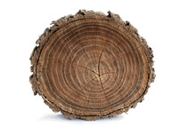 Wood Background. Old Wooden Oak Tree Cut Surface Isolate On White. Detailed Warm Dark Brown Tones Of Felled Tree Trunk Or Stump. Rough Organic Texture Of Tree Rings With Close Up Of End Grain