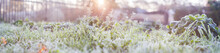Landscape Panorama Frozen Grass Branch In Winter. Banner Frame Of Froze Lush Green Grass With Ice Crystals On Natural Blurry Bokeh Natural Background. Close-up, Wide Format, Copy Space.