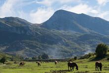 Caballos Y Vacas Pastando Por Un Prado Verde En El Campo En La Localidad De Burón (Castilla Y León, España).