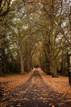 A Country Road Lined By Autumnal Trees. Autumn Fall Colours
