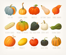 Big Variety Of Pumpkins With Names. List Of Famous Squashes Pumpkins And Gourds. Pumpkins For Halloween Decorations. Isolated Vector Clip Arts