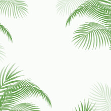 Palm Leaves Natural Soft Green Frame Plant Vector For Mock Insert Text Here For Gift Card And Blogs, Website Texture Template