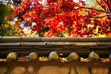 Breathtaking Shot Of Fall Leaves On A Traditional Wall In Korea