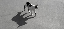 Banner Stray Cat With Big Shadow On The Asphalt Road. Black And White Photo