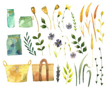 Watercolor Set Of Hand Painted Wildflowers And Dried Flowers, Wheat Spike, Flax Flowers, Woven Baskets And Leaves, For Cards, Invitations And Your Design