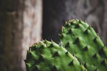 Cactus En Detalle Macro Naturaleza Colores