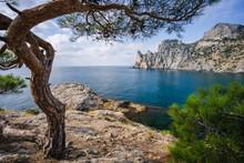 Relict Pine On A Rocky Seashore. Cape Kapchik, Noviy Svet, Crimea