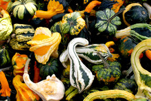Background Of Fresh Colourful Striped Gourds