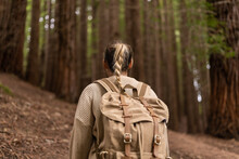 Back View Of Woman With Backpack Hiking In Autumn Sequoia Forest