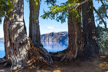 Scenic View Of Deep Blue Water Of Crater Lake, Oregon, Through Large Lush Trees On A Bright Blue Sky Sunny Day.