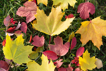 Autumn Background Top View Background. Colorful Leaves And Berries On Green Grass. Postcard, Layout, Copy Space