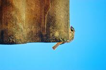 Pássaro No Telhado