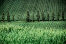 Treelined Farmland, Monferrato, Alessandria, Piedmont, Italy