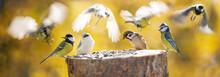 Group Of Little Birds Perching On A Bird Feeder