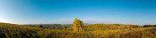 Panorama Of Autumn Tree On A Large Lawn.