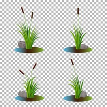 Vector Set Of 4 Cattail Stalk Bushes In Swamp Water With Stones On The Side Isolated On Transparent Background