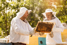 Beekeepers On Apiary. Beekeepers Are Working With Bees And Beehives On The Apiary.