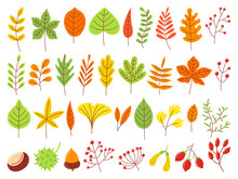 Colorful Autumn Leaves. Autumnal Yellow Leaf, Forest Nature Orange Leafage And September Red Leaves Flat Vector Set